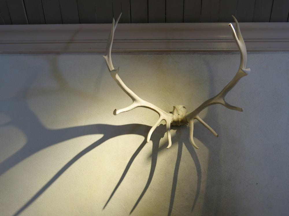 Shadow Antlers